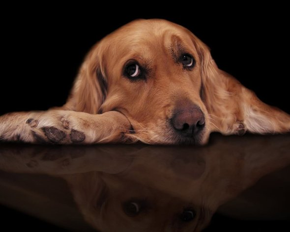 sad-dog-graphic